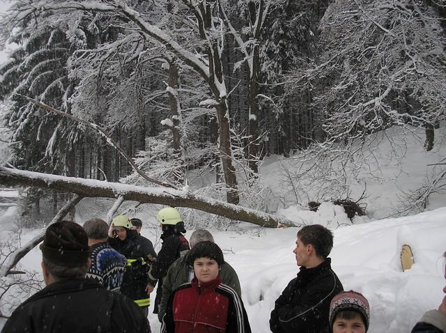 Pozeráš obrázky z galérie: Strom - I. Korňa